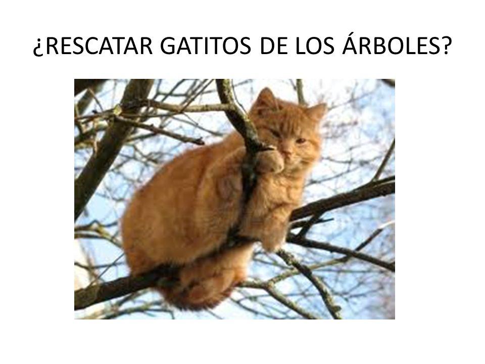 ¿RESCATAR GATITOS DE LOS ÁRBOLES