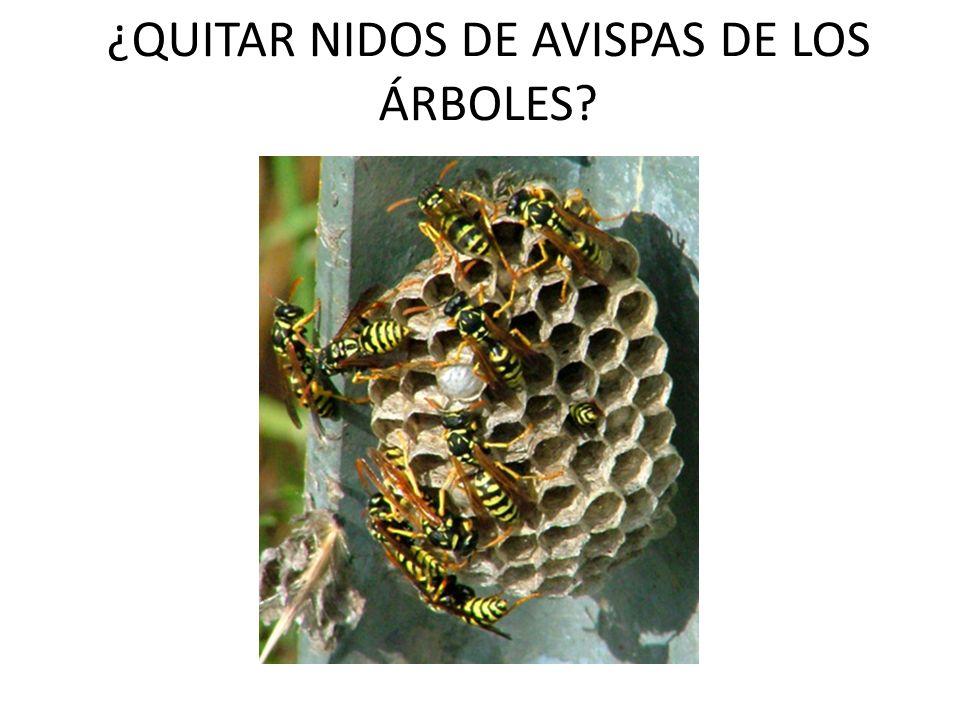 ¿QUITAR NIDOS DE AVISPAS DE LOS ÁRBOLES