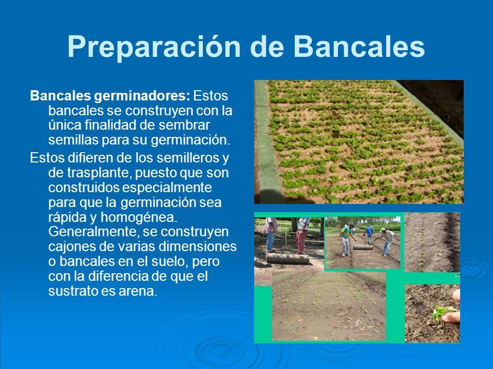 Taller de capacitaci n para el establecimiento de viveros for Preparacion de sustrato para viveros forestales