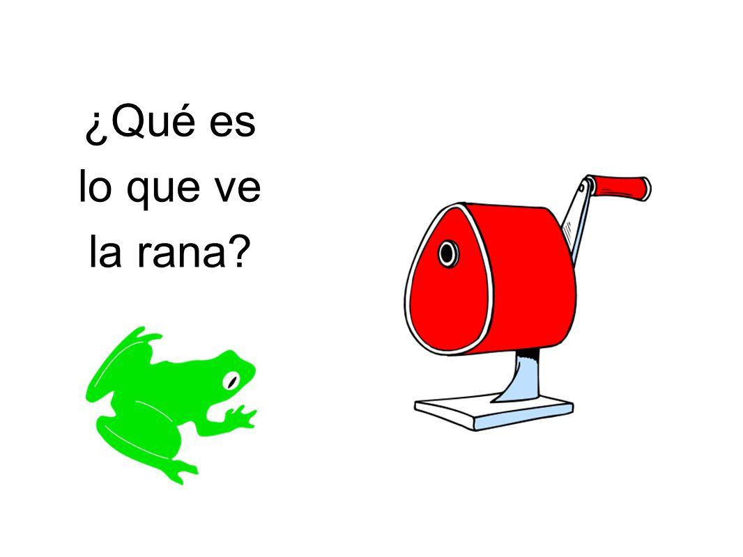 ¿Qué es lo que ve la rana