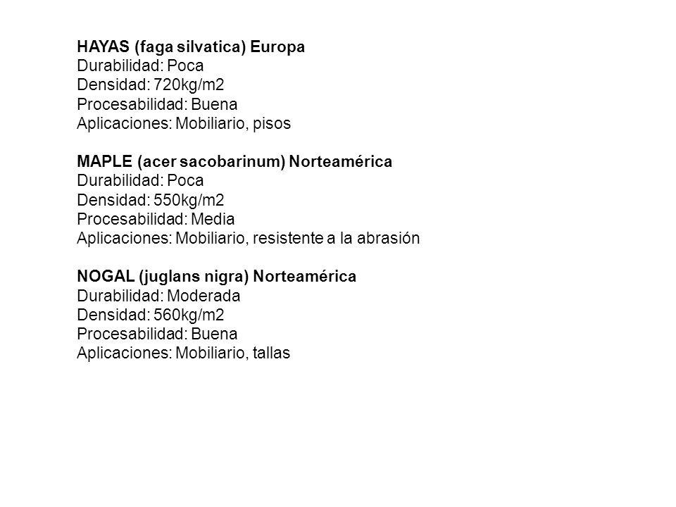 HAYAS (faga silvatica) Europa