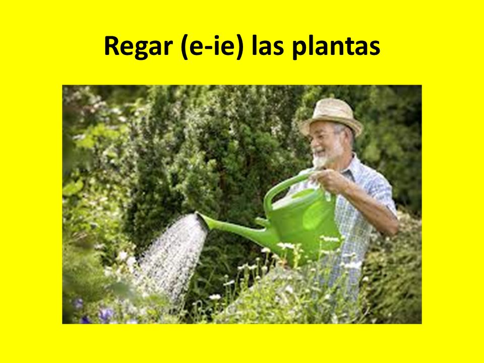 Regar (e-ie) las plantas