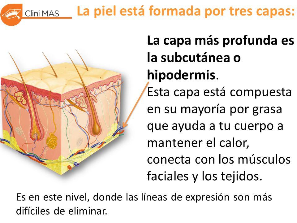 La piel está formada por tres capas: