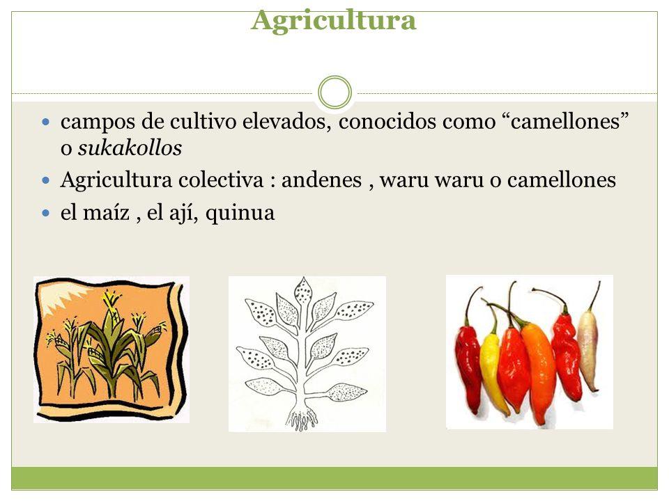 Agricultura campos de cultivo elevados, conocidos como camellones o sukakollos. Agricultura colectiva : andenes , waru waru o camellones.