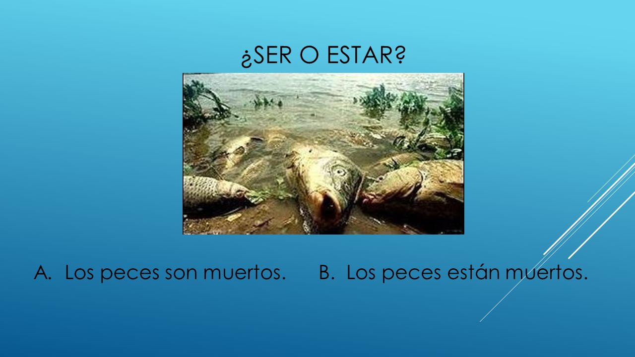 ¿ser o estar A. Los peces son muertos. B. Los peces están muertos.