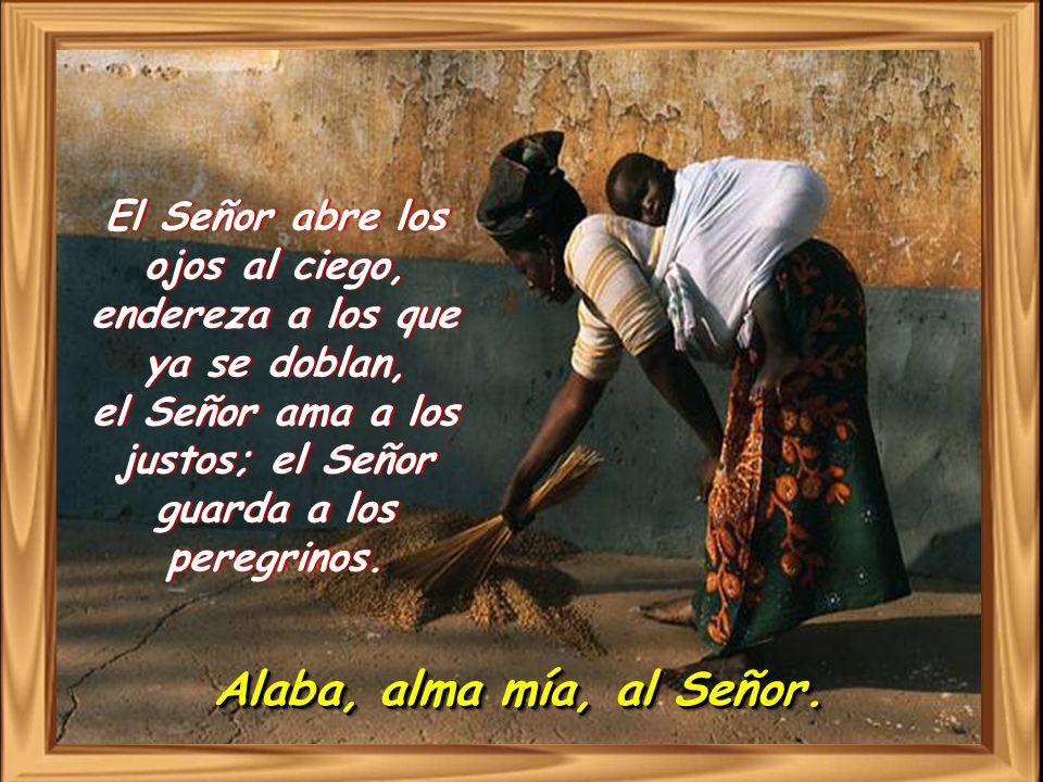 El Señor abre los ojos al ciego, endereza a los que ya se doblan, el Señor ama a los justos; el Señor guarda a los peregrinos.