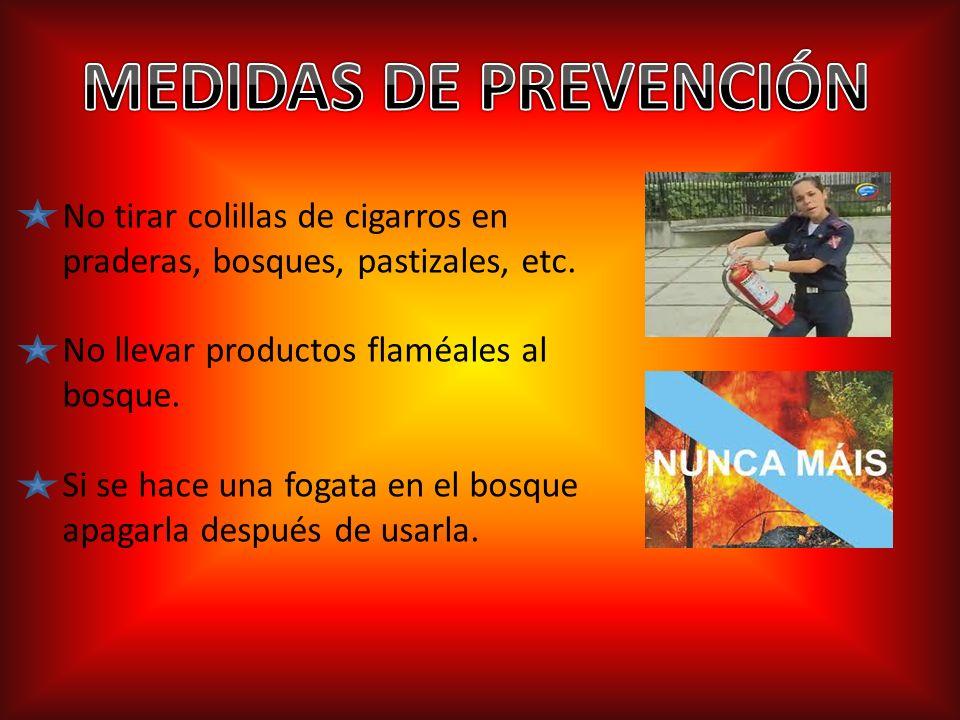 MEDIDAS DE PREVENCIÓNNo tirar colillas de cigarros en praderas, bosques, pastizales, etc. No llevar productos flaméales al bosque.