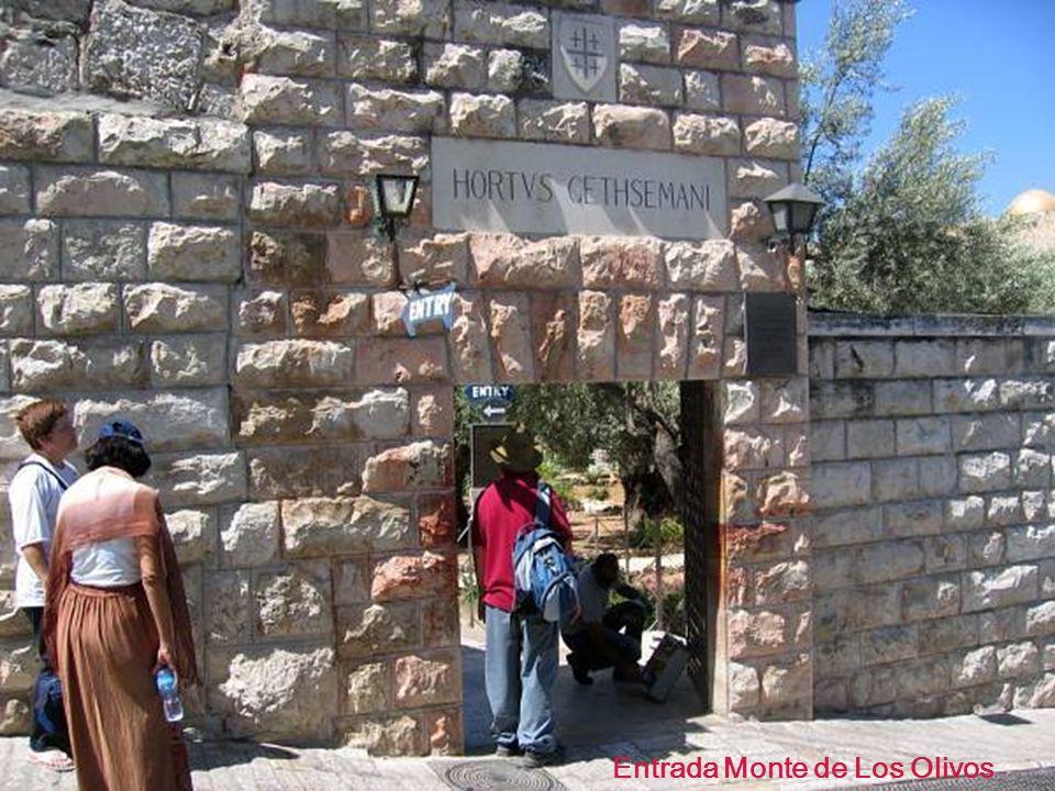 Entrada Monte de Los Olivos