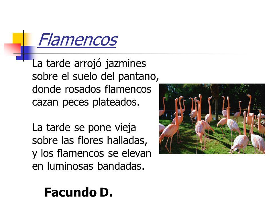 Flamencos La tarde arrojó jazmines sobre el suelo del pantano,