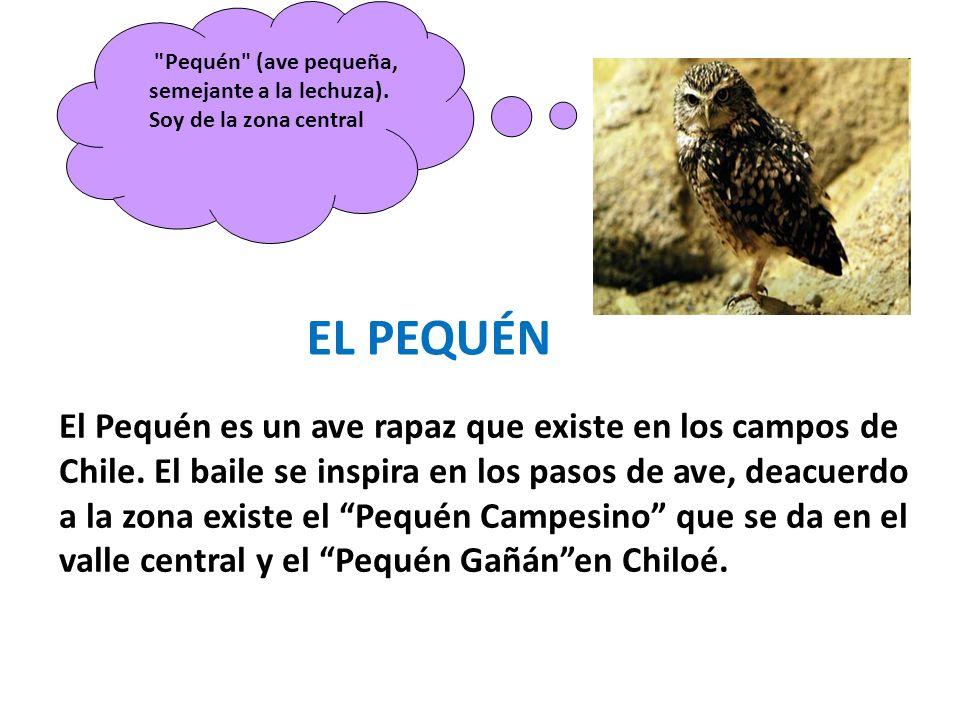 Pequén (ave pequeña, semejante a la lechuza). Soy de la zona central