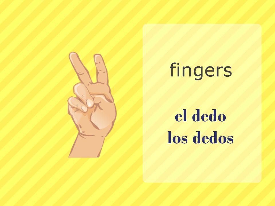 fingers el dedo los dedos