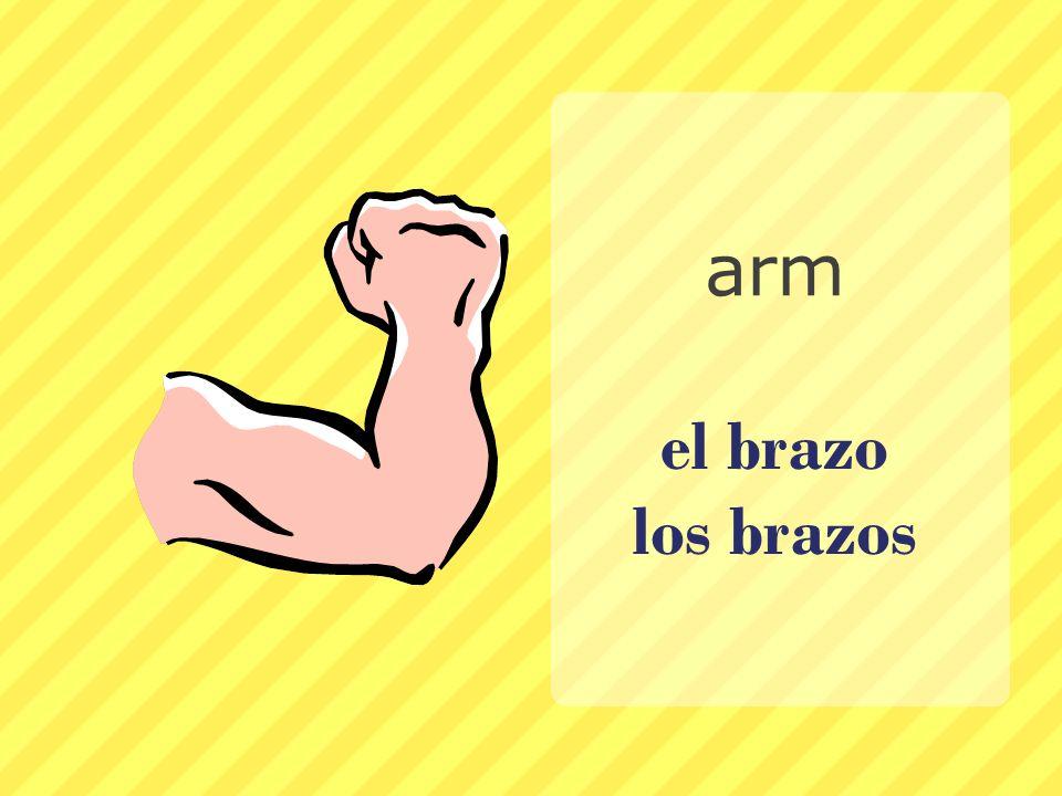 arm el brazo los brazos
