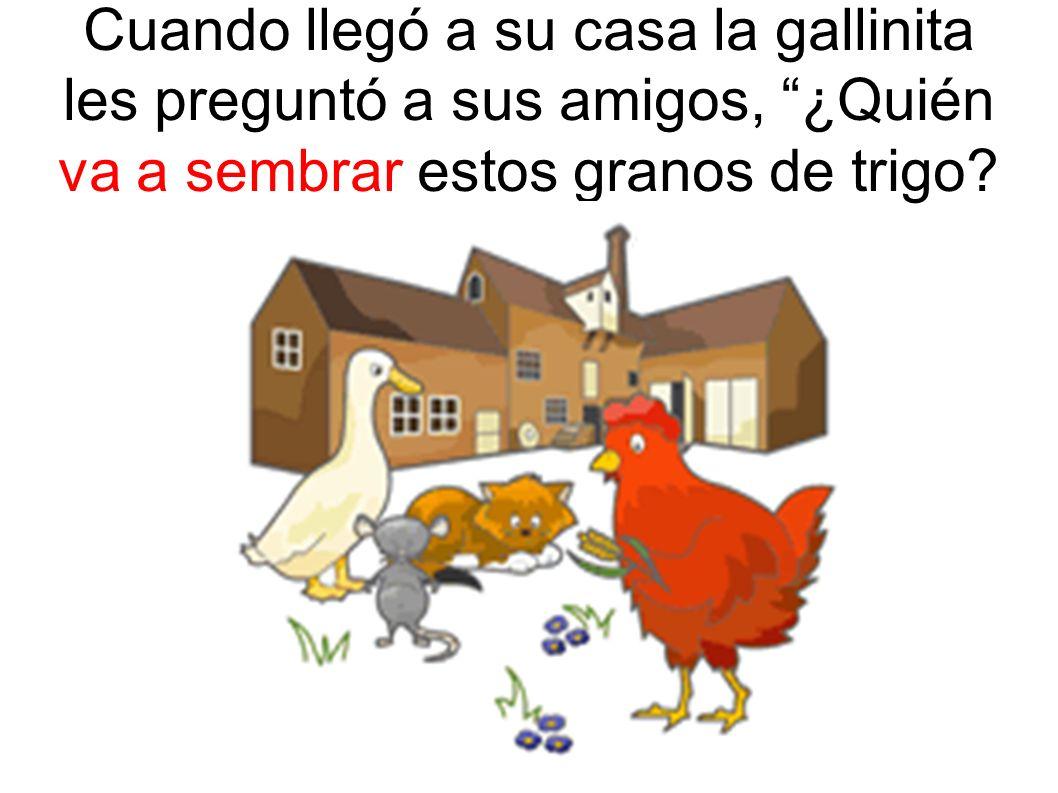 Cuando llegó a su casa la gallinita les preguntó a sus amigos, ¿Quién va a sembrar estos granos de trigo