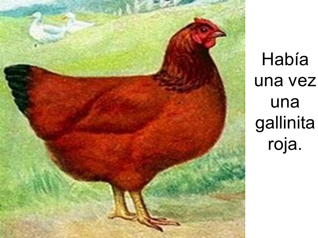 Había una vez una gallinita roja.