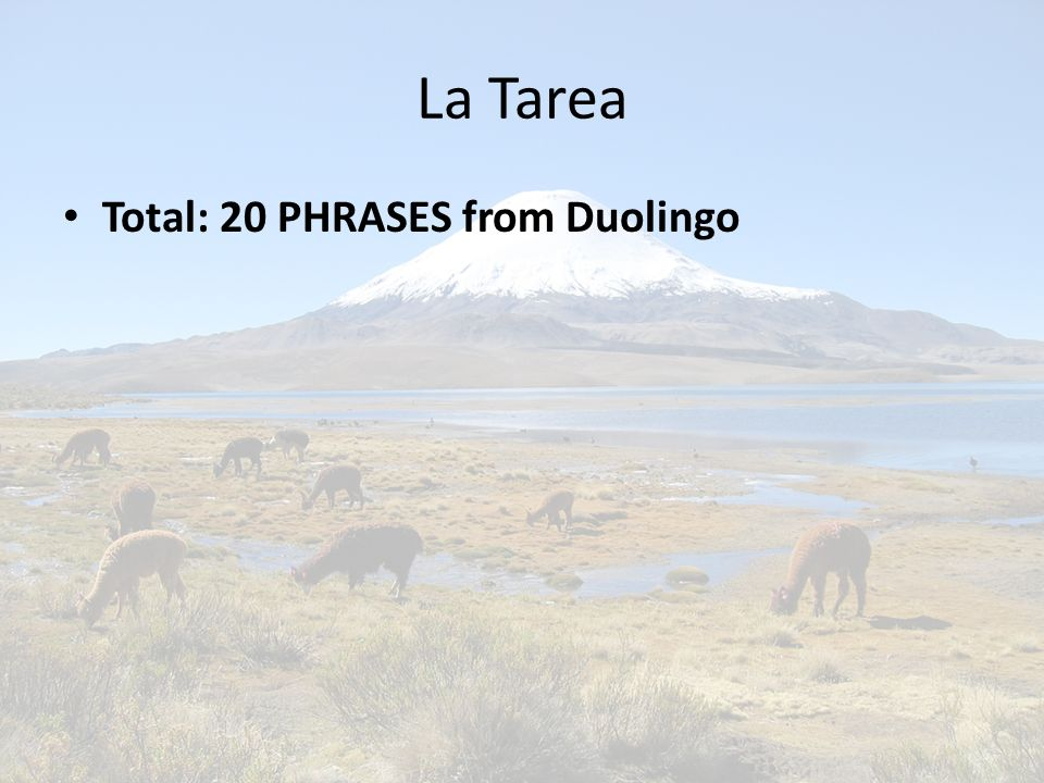 La Tarea Total: 20 PHRASES from Duolingo