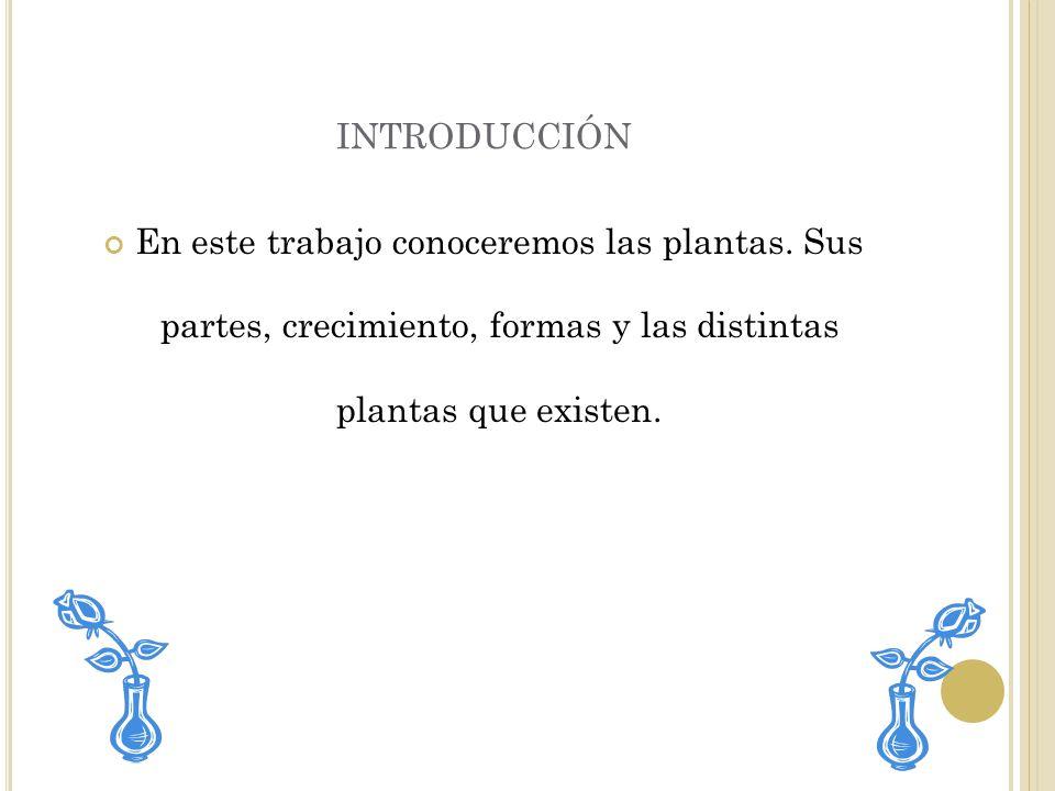introducción En este trabajo conoceremos las plantas.