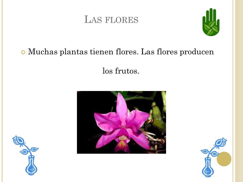 Muchas plantas tienen flores. Las flores producen los frutos.