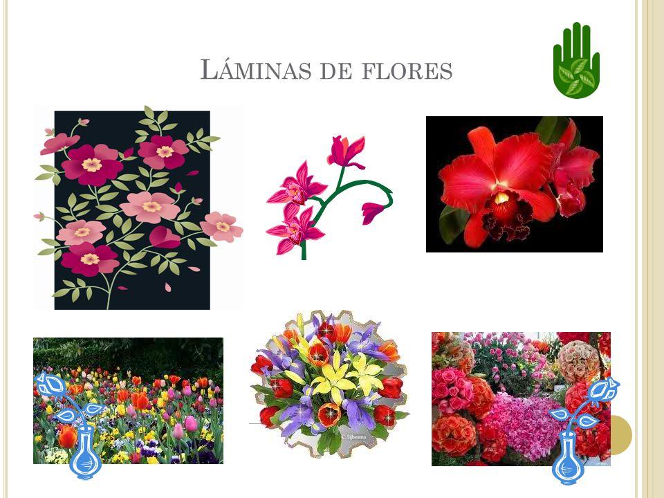Láminas de flores
