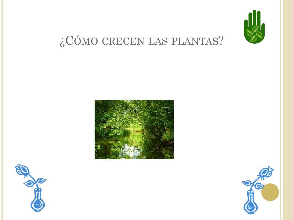 ¿Cómo crecen las plantas