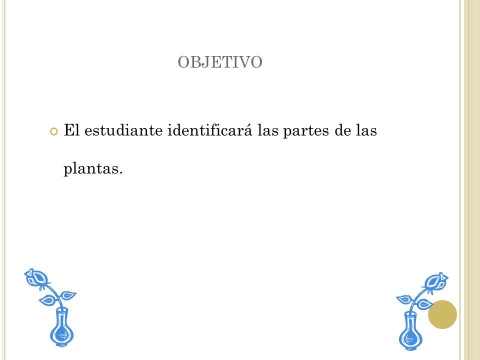 objetivo El estudiante identificará las partes de las plantas.