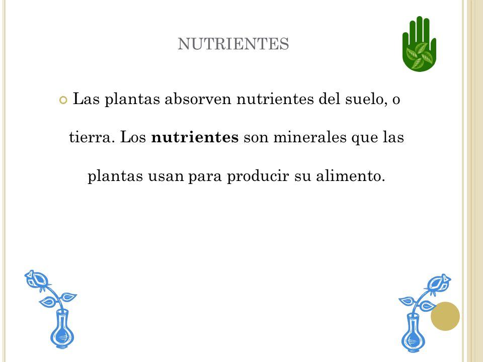 nutrientes Las plantas absorven nutrientes del suelo, o tierra.