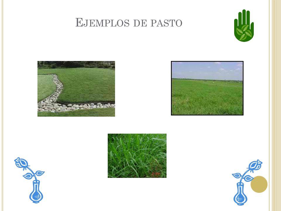 Ejemplos de pasto