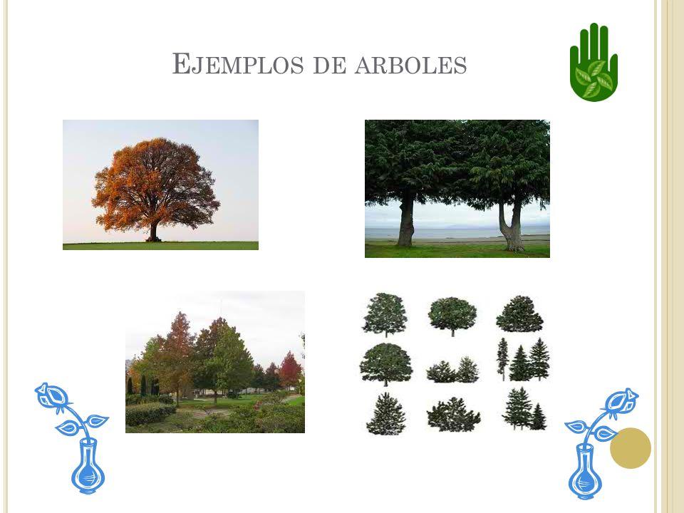 Ejemplos de arboles