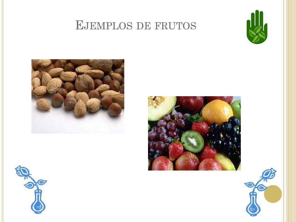 Ejemplos de frutos