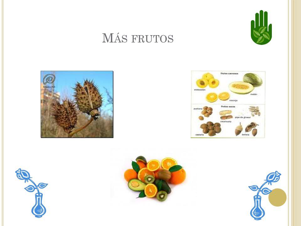 Más frutos