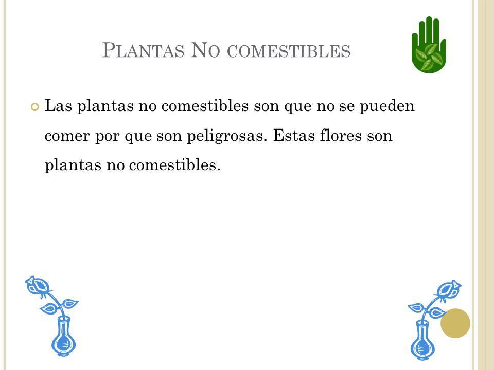Plantas No comestibles