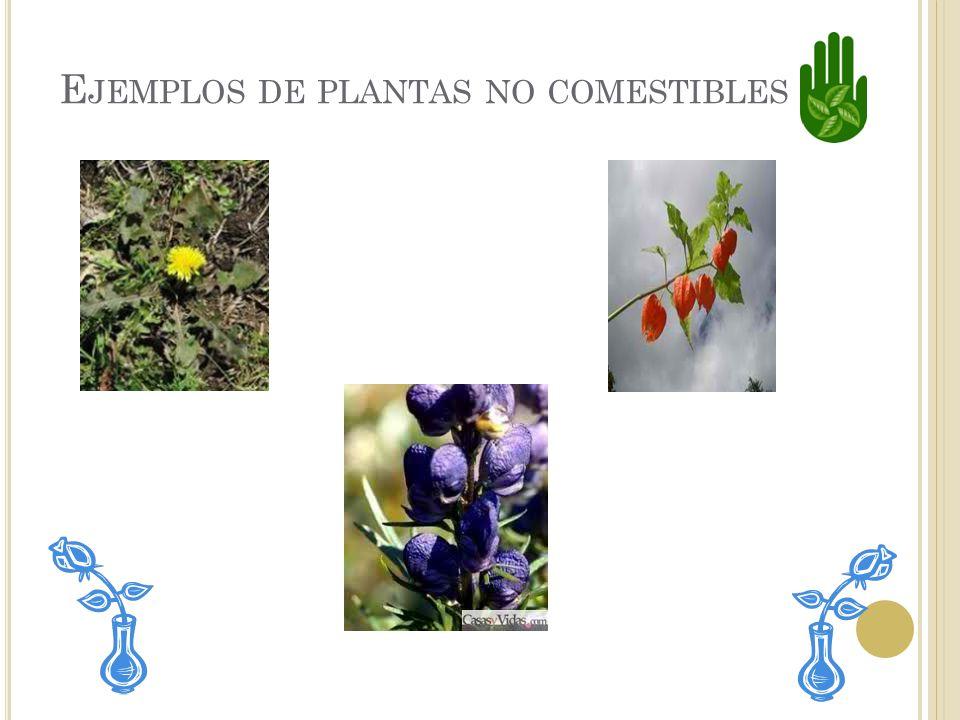 Ejemplos de plantas no comestibles