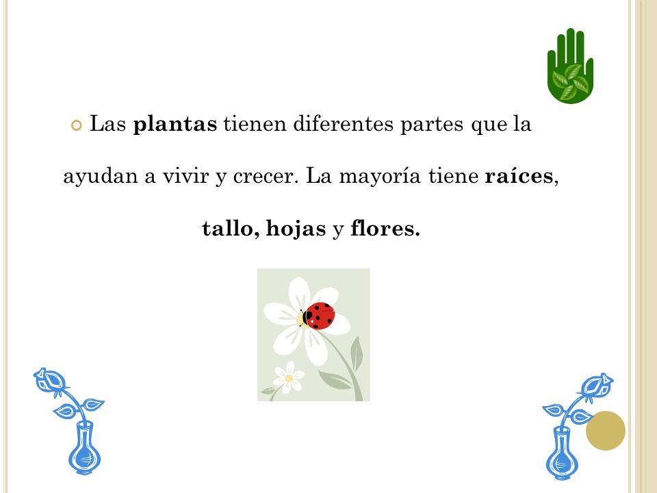 Las plantas tienen diferentes partes que la ayudan a vivir y crecer