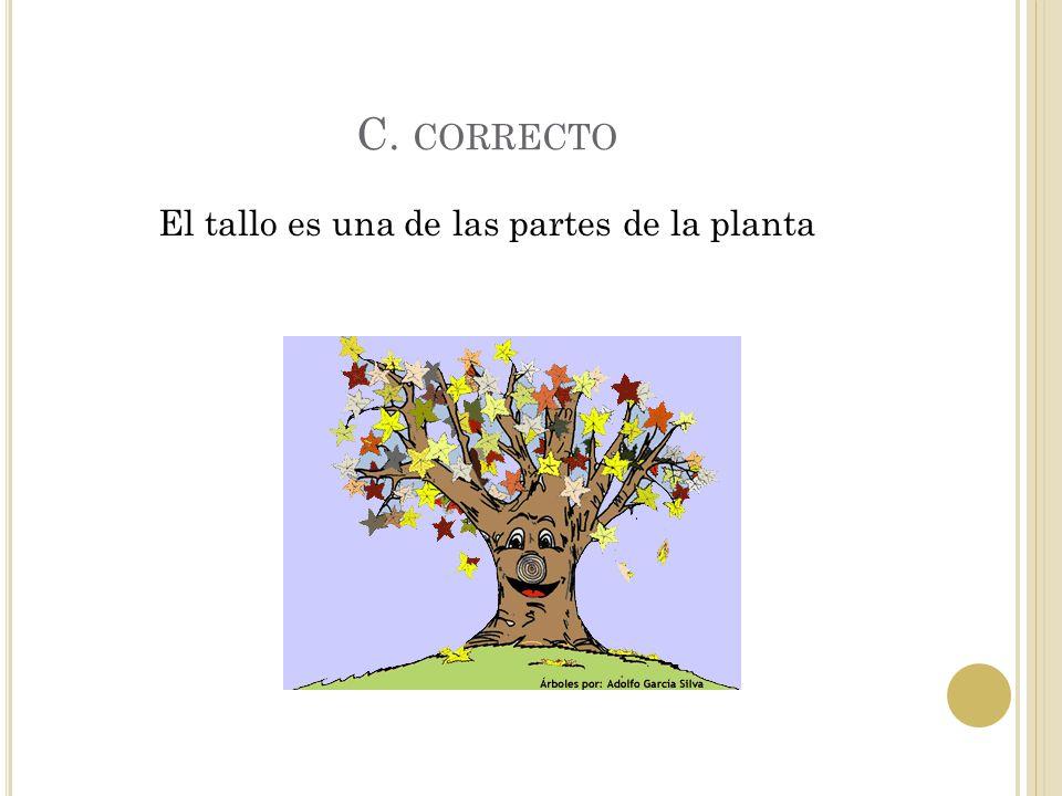 El tallo es una de las partes de la planta