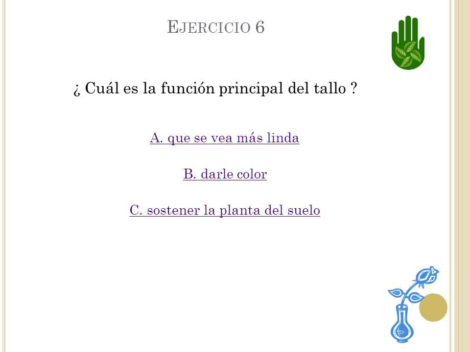 Ejercicio 6 ¿ Cuál es la función principal del tallo