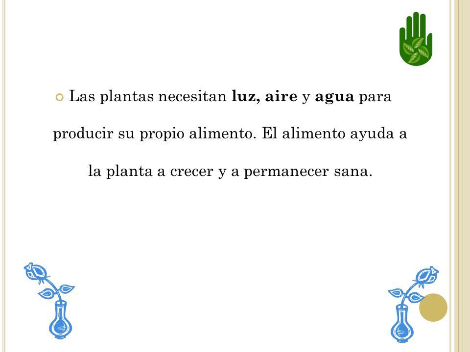 Las plantas necesitan luz, aire y agua para producir su propio alimento.