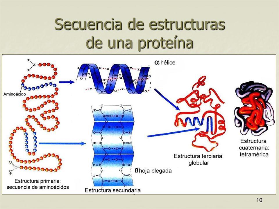 Secuencia de estructuras de una proteína