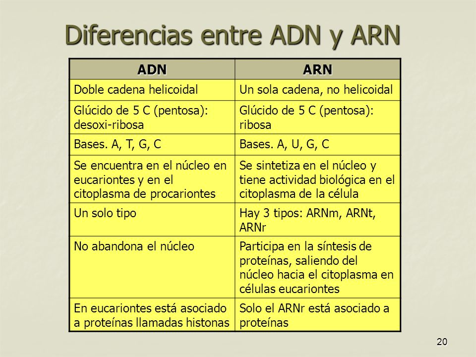 Diferencias entre ADN y ARN
