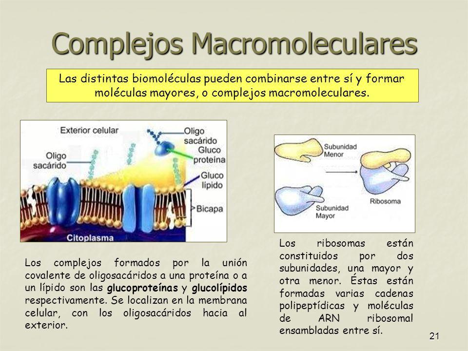 Complejos Macromoleculares