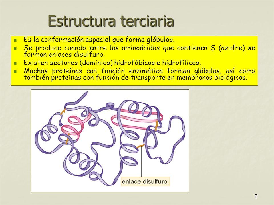 Estructura terciaria Es la conformación espacial que forma glóbulos.