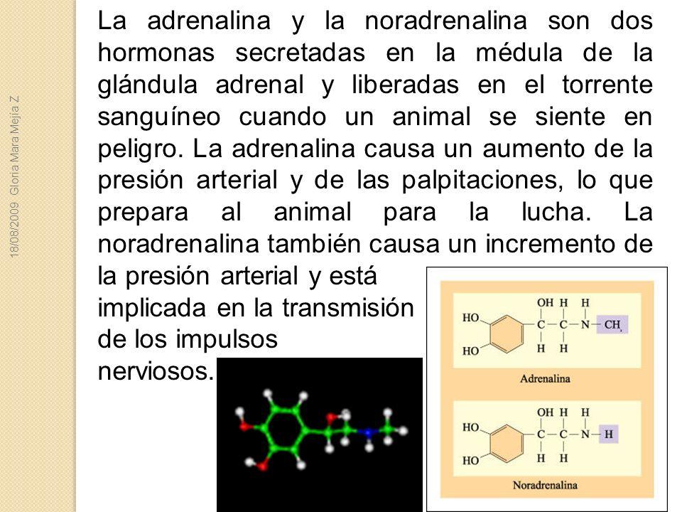 implicada en la transmisión de los impulsos nerviosos.