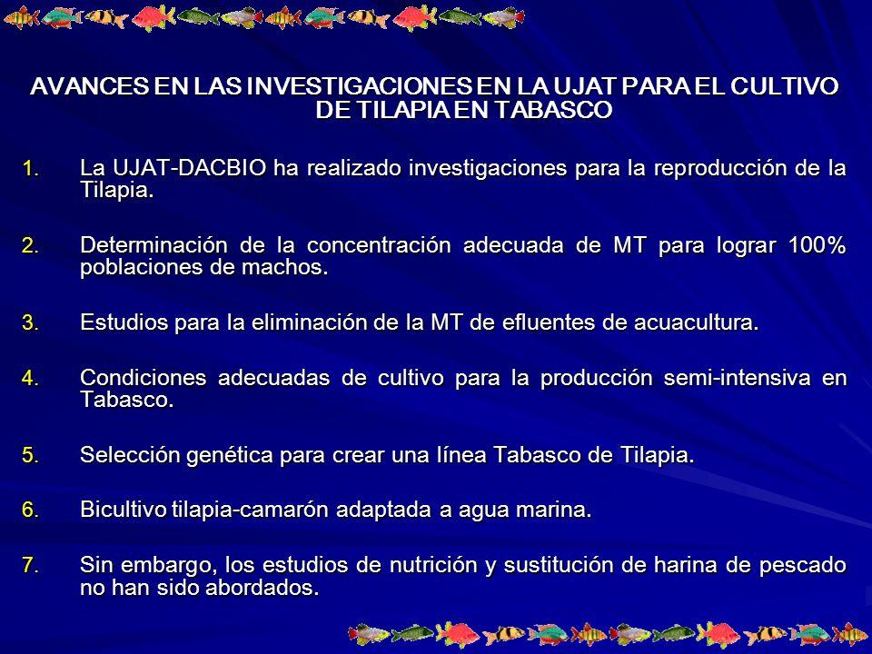 AVANCES EN LAS INVESTIGACIONES EN LA UJAT PARA EL CULTIVO DE TILAPIA EN TABASCO