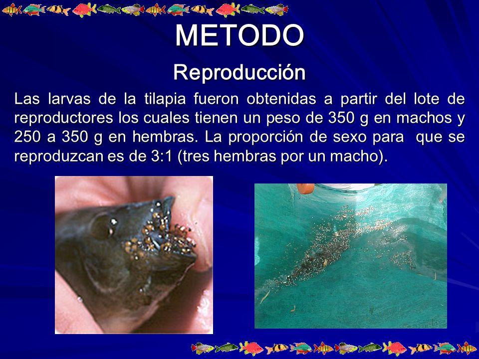 METODO Reproducción.