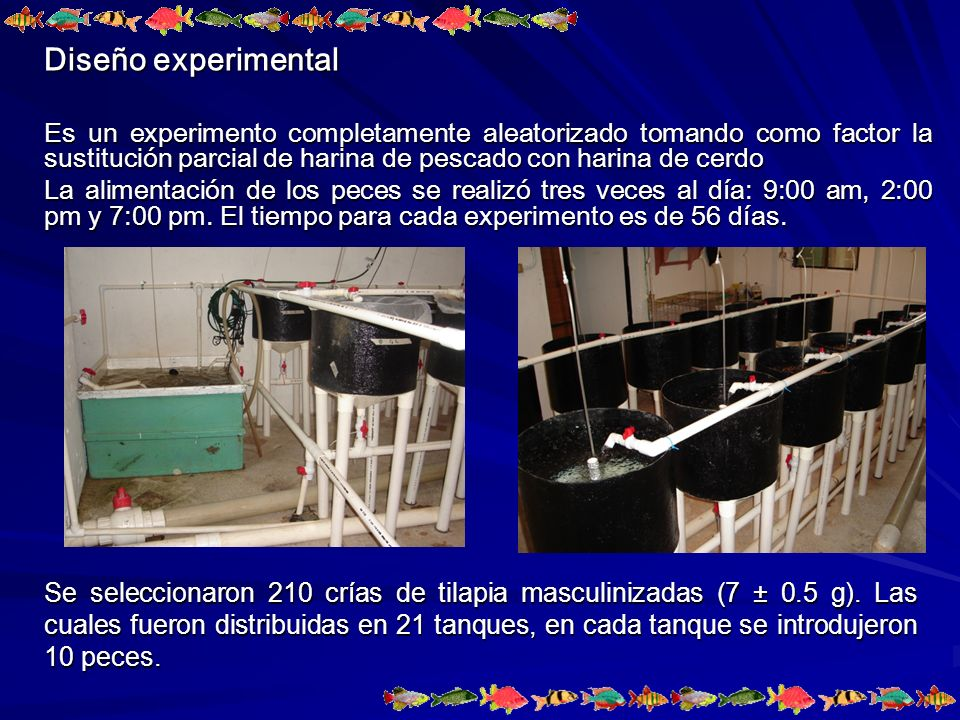 Diseño experimental Es un experimento completamente aleatorizado tomando como factor la sustitución parcial de harina de pescado con harina de cerdo.