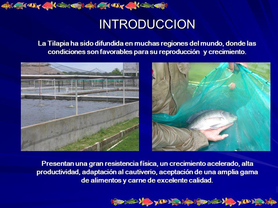 INTRODUCCION La Tilapia ha sido difundida en muchas regiones del mundo, donde las condiciones son favorables para su reproducción y crecimiento.