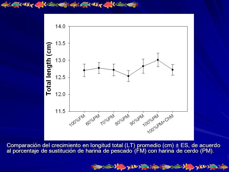 Comparación del crecimiento en longitud total (LT) promedio (cm) ± ES, de acuerdo al porcentaje de sustitución de harina de pescado (FM) con harina de cerdo (PM).