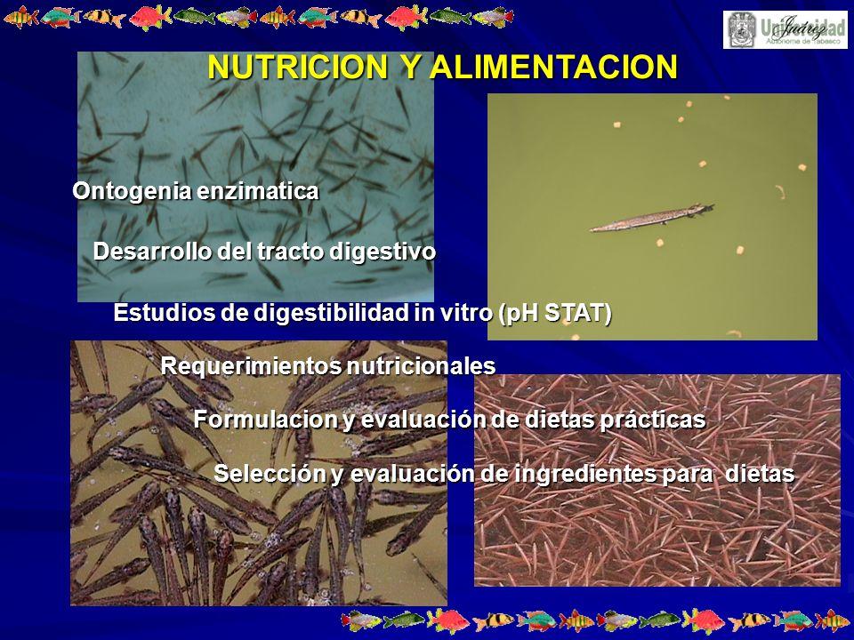NUTRICION Y ALIMENTACION