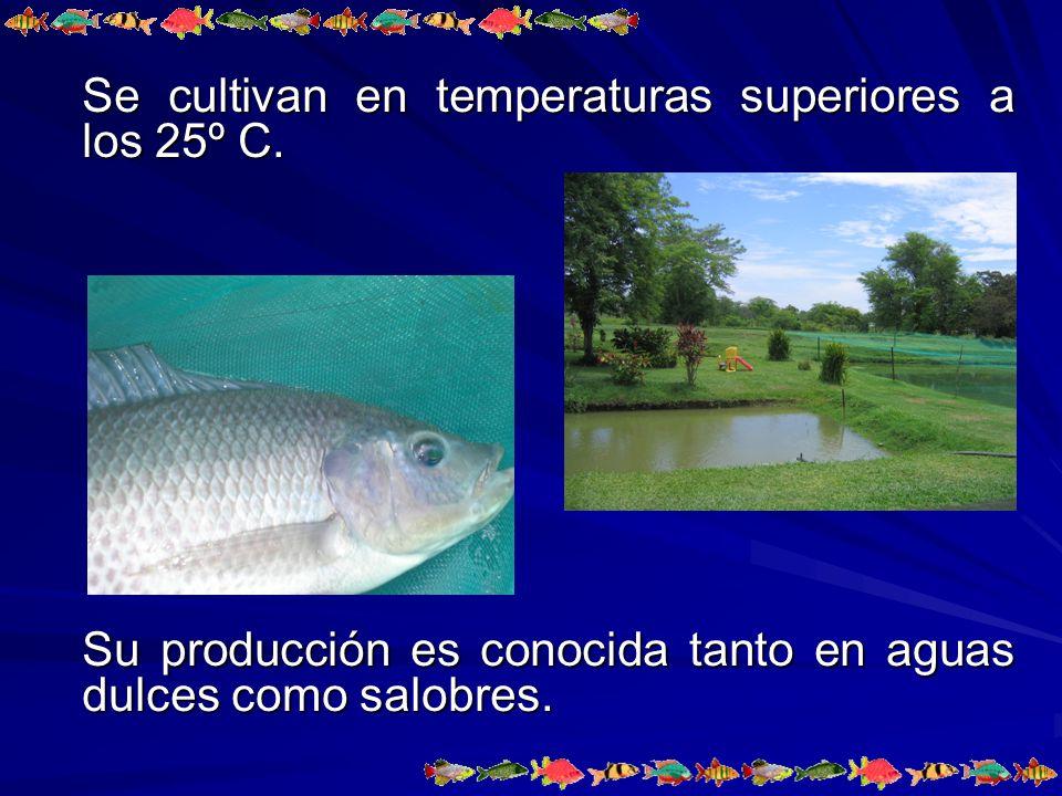 Se cultivan en temperaturas superiores a los 25º C.