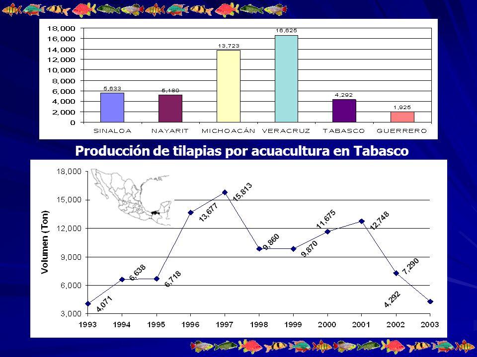 Producción de tilapias por acuacultura en Tabasco