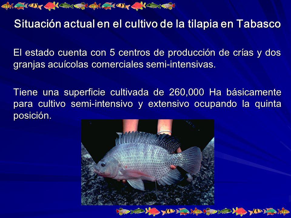 Situación actual en el cultivo de la tilapia en Tabasco