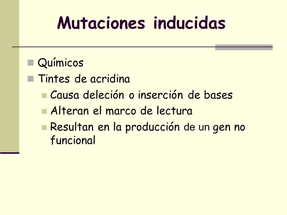 Mutaciones inducidas Químicos Tintes de acridina
